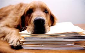 Why You Should Bring Your Dog ToWork